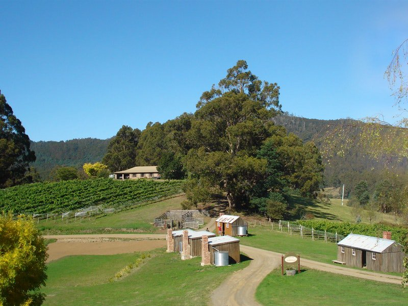 Hartzview Vineyard